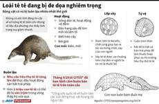 [Infographics] Loài động vật có vú bị buôn lậu nhiều nhất thế giới