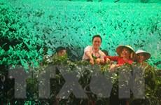 Festival Hoa Đà Lạt: Mở màn Tuần văn hóa trà và tơ lụa Bảo Lộc