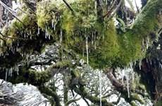 Nhiệt độ còn âm 3 độ C, băng giá xuất hiện trên đỉnh núi ở Cao Bằng