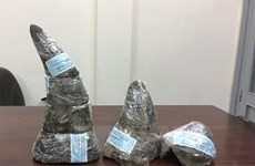 """16 tổ chức kêu gọi xét xử nghiêm minh """"trùm"""" buôn lậu sừng tê giác"""