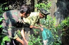 Khởi tố vụ săn bắt sơn dương ở Vườn Quốc gia Phong Nha-Kẻ Bàng