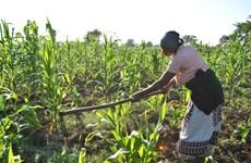 Quỹ Phát triển Nông nghiệp Quốc tế Liên hợp quốc có phó chủ tịch mới