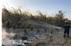 Lãnh đạo Kon Tum kiểm tra hiện trường vụ cháy trên cánh đồng mía