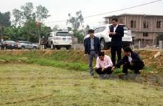 Lãnh đạo Nghệ An xuống đồng kiểm tra sản xuất vụ Xuân trong dịp Tết