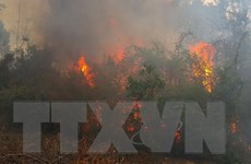 Trên 40ha rừng thông phòng hộ ở tỉnh Gia Lai bị cháy rụi