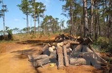 """Đắk Nông: Khởi tố đối tượng đưa 200 triệu đồng để """"xin"""" phá rừng"""