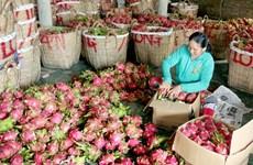 Hoa quả Việt Nam xuất khẩu sang Quảng Tây sẽ bị truy xuất nguồn gốc
