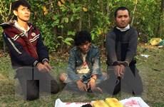 Bắt giữ 3 đối tượng vận chuyển 24.000 viên ma túy từ Lào về Việt Nam