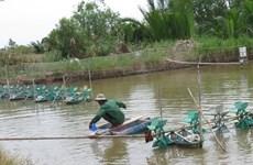 Tổng cục Thủy sản: Nguy cơ bùng phát dịch bệnh trên tôm nuôi