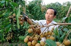 Xây dựng vùng nguyên liệu trái cây tại Đồng bằng sông Cửu Long