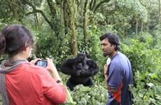 Công viên thú hoang dã Virunga đóng cửa sau các vụ bắt cóc, giết người