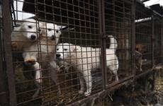 """Bị phạt 2.700 USD vì giết chó """"không có lý do chính đáng"""""""