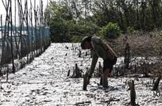 Cà Mau thu hồi quyết định đạt chuẩn nông thôn mới của xã Rạch Chèo
