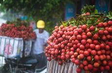 Bắc Giang: Doanh thu từ vải thiều và dịch vụ hỗ trợ đạt 5.400 tỷ đồng