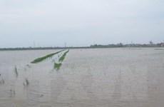 Gần 70.000ha cây trồng tại Bắc Bộ và Bắc Trung bộ bị ngập úng