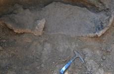 Phát hiện hóa thạch loài thú răng chạm có niên đại 16.000 năm