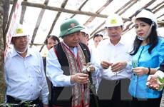 Thủ tướng Nguyễn Xuân Phúc tới thăm vùng trồng sâm Ngọc Linh