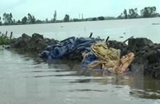 Ứng phó với lũ sớm khi đồng bằng sông Cửu Long vào mùa nước nổi