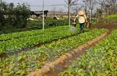 Những thách thức đối với nông nghiệp sạch: Gặp khó về thị trường