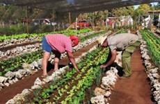Cuba kêu gọi Mỹ tận dụng tiềm năng hợp tác nông nghiệp giữa hai nước