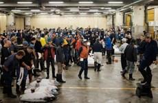 Chợ cá Tsukiji nổi tiếng chính thức đóng cửa sau 83 năm kinh doanh