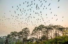 Quảng Ninh tăng thu giữ phương tiện bắt các loại chim hoang dã