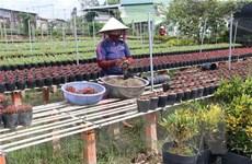 Sa Đéc chuẩn bị hơn 3 triệu giỏ hoa kiểng phục vụ Tết 2019