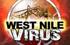 Virus Tây sông Nile và Zika có thể gây ra các bệnh về tiêu hóa
