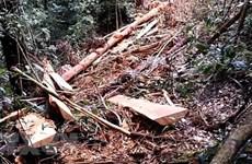 Phúc tra hiện trường các vụ phá rừng từ năm 2016 đến nay tại Lâm Đồng
