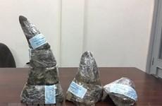Gần 34 kg sừng tê giác từ Nam Phi quá cảnh Doha về Việt Nam bị thu giữ