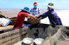 Ngư dân vùng biển Thừa Thiên-Huế được mùa cá cơm, cá dìa