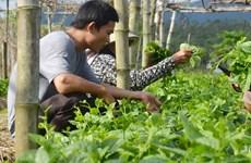 Tập đoàn FLC dự kiến đầu tư 1,5 tỷ USD vào lĩnh vực nông nghiệp