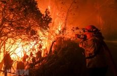 Mỹ: Hơn 630 người mất tích vì thảm họa cháy rừng ở California