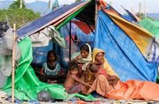 Bangladesh có thể hoãn kế hoạch hồi hương người Rohingya