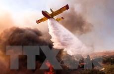 Đã có 77 người thiệt mạng trong vụ cháy rừng ở bang California