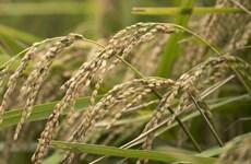 Trung Quốc nới lỏng lệnh cấm nhập khẩu thực phẩm từ Nhật Bản