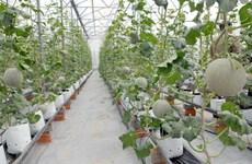 Nông nghiệp công nghệ cao: Doanh nghiệp Việt còn nhiều nỗi lo