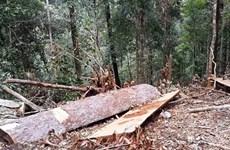 Chuyển hồ sơ vụ làm mất hơn 550ha rừng sang cơ quan điều tra
