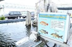 Formosa Hà Tĩnh đã khắc phục hầu hết các tồn tại về môi trường