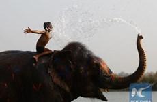 Sôi động lễ hội voi ở Công viên quốc gia Chitwan của Nepal