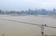 Mưa lớn kéo dài, các hồ thủy lợi xả lũ, một số vùng ở Phú Yên bị ngập