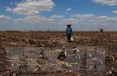 Đắk Lắk: Cánh đồng mía bốc cháy dữ dội, 100ha bị thiêu rụi