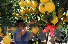 Nhiều loại cây trái độc lạ ra mắt thị trường trong dịp Tết Nguyên đán