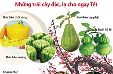 [Infographics] Những trái cây độc, lạ cho ngày Tết Nguyên đán