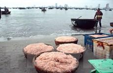 Ngư dân Đà Nẵng phấn khởi vì trúng đậm mùa ruốc biển, thu lãi cao