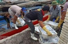 """Khắc phục """"thẻ vàng"""" trong khai thác thủy sản: Vẫn còn nhiều bất cập"""