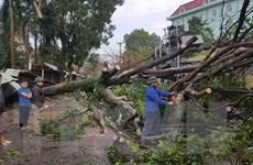 Thái Nguyên: Dông lốc lúc rạng sáng khiến hơn 570 ngôi nhà bị tốc mái