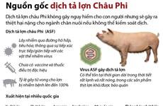 [Infographics] Tìm hiểu nguồn gốc dịch tả lợn châu Phi