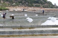 Diêm dân Ninh Thuận phấn khởi vì muối được mùa, được giá
