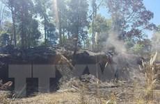 Trên 10ha rừng thông bị cháy, hơn 200 người tham gia dập lửa